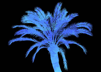 Photograph - Blue Palm Tree by Andrea Mazzocchetti