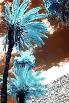 Photograph - Blue Palms Along The Wall by John Rizzuto