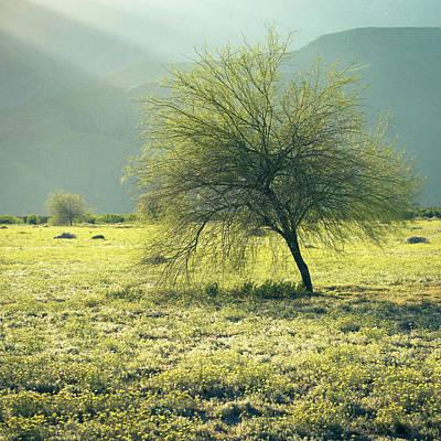 Photograph - Blue Palo Verde by Alexander Kunz