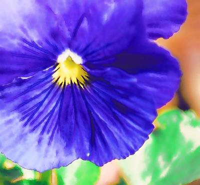 Photograph - Blue Pansy by Donna Bentley