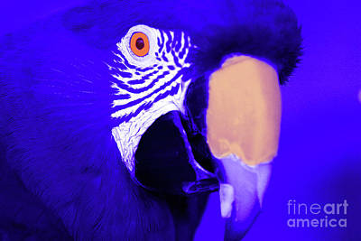 Photograph - Blue Parrot  by Rich Collins