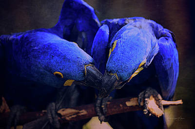 Photograph - Blue Parrots by Maria Angelica Maira