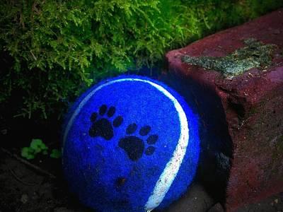 Photograph - Blue Paws Tennis Ball by Eddie G