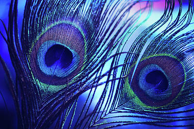 Photograph - Blue Peacock Feathers by Jenny Rainbow