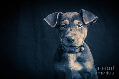 Photograph - Blue Period Puppy by Edward Fielding