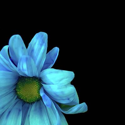 Lovely Lavender - Blue Petals by UMe images
