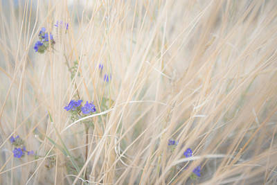 Photograph - Blue Phacelia by Shuwen Wu