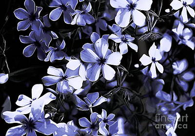 Photograph - Blue Phlox by Erica Hanel