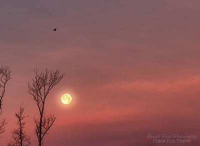 Photograph - Blue Pink Moon by Russell Pugh