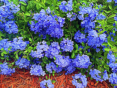 Photograph - Blue Plumbago Blossoms Expressionalism by Aimee L Maher ALM GALLERY