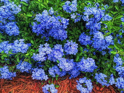 Photograph - Blue Plumbago Blossoms H D R  by Aimee L Maher ALM GALLERY