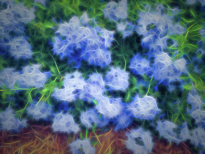 Photograph - Blue Plumbago Blossoms Soft Glow by Aimee L Maher ALM GALLERY
