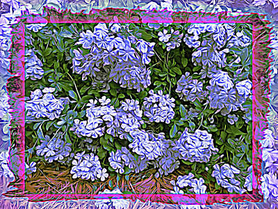 Photograph - Blue Plumbago Blossoms Wild Flower by Aimee L Maher ALM GALLERY