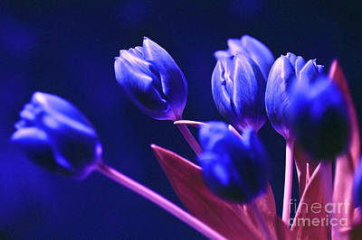 Blue Poetry Art Print