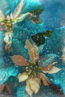 Photograph - Blue Poinsettia by Teresa Wilson