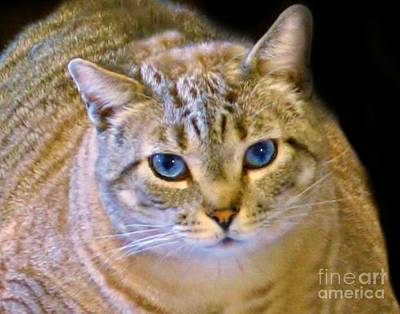 Photograph - Strikingly Handsome by Barbara S Nickerson