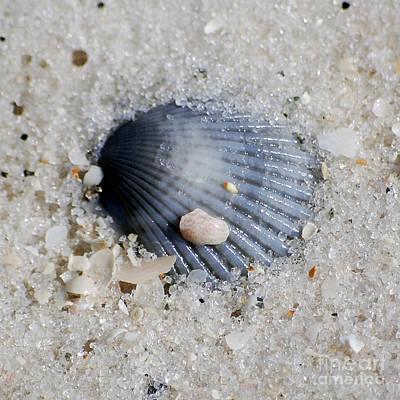 Photograph - Blue Purple Ribbed Sea Shell Macro Buried In Fine Wet Sand Square Format by Shawn O'Brien