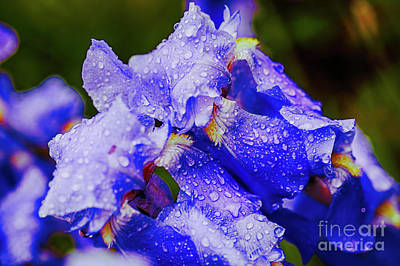 Photograph - Blue Rain by Rick Bragan