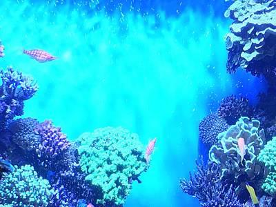 Photograph - Blue Reef by Kruti Shah