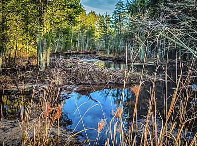 New Jersey Pine Barrens Photograph - Blue Reflection by Louis Dallara