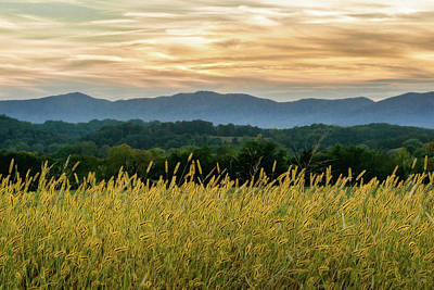 Photograph - Blue Ridge Mountains by Dana Sohr