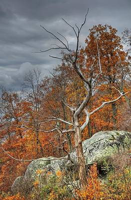 Blue Ridge Parkway Tree 2 Art Print by Todd Hostetter