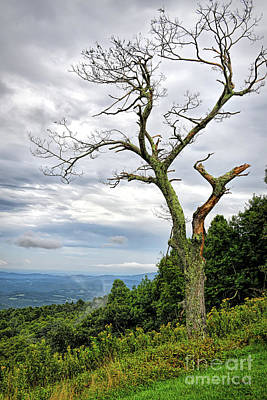Photograph - Blue Ridge Parkway Views - Bare Branches by Kerri Farley