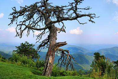 Photograph - Blue Ridge Tree by Kathryn Meyer