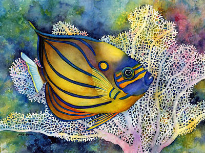Colorful Tropical Fish Painting - Blue Ring Angelfish by Hailey E Herrera
