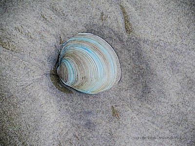 Photograph - Blue Rings Shell by Charles McKelroy