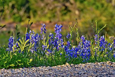 Blue Roads Of Texas Original