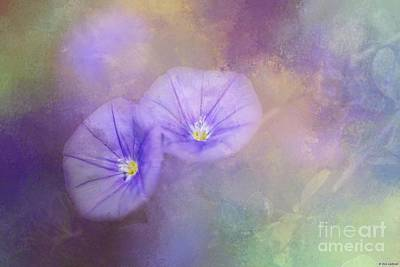 Photograph - Blue Rock Bindweed by Eva Lechner