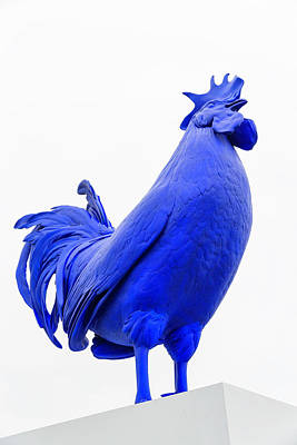 Photograph - Blue Rooster by Fran Gallogly