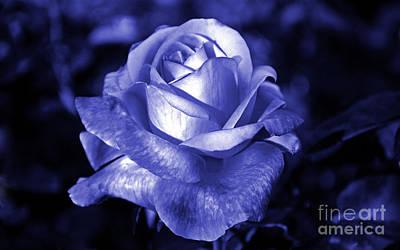 Photograph - Blue Rose by Frank Larkin