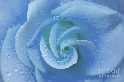 Blue Rose Art Print by Julia Hiebaum