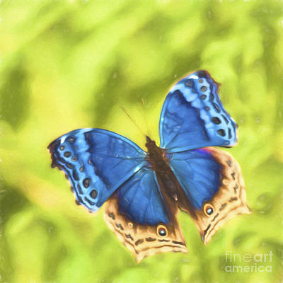 Digital Art - Blue Salamis Butterfly by Liz Leyden