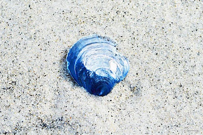 Blue Seashell By Sharon Cummings Art Print by Sharon Cummings