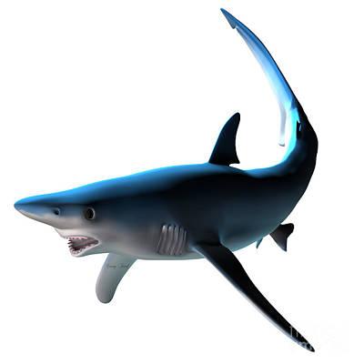 Blue Shark Art Print by Corey Ford