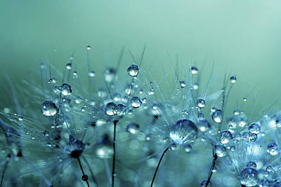 Photograph - Blue Shower by Sharon Johnstone