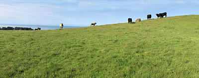 Photograph - Blue Skies And Cows On The Horizon  by Floyd Snyder