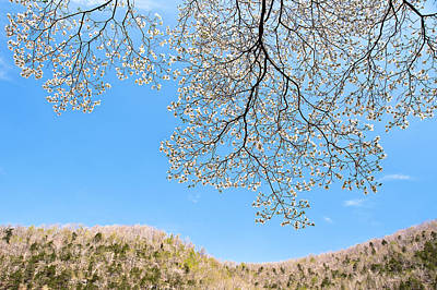 Blue Skies And Dogwood Art Print by Tamyra Ayles