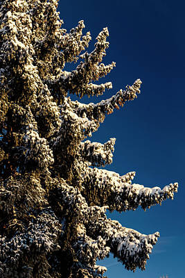 Photograph - Blue Skies And Fresh Fallen Powder by James BO Insogna