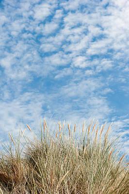 Photograph - Blue Sky And Marram Grass II by Helen Northcott