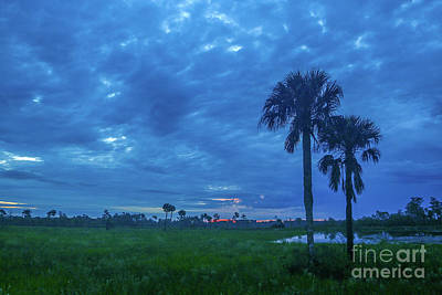 Photograph - Blue Sky And Palm Sunrise by Tom Claud