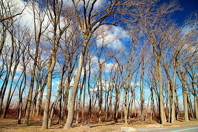 Photograph - Blue Sky And Trees by Valentino Visentini
