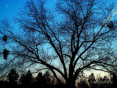 Photograph - Blue Sky At Night by Sue Melvin