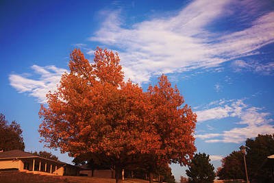 Photograph - Blue Sky Autumn by Toni Hopper