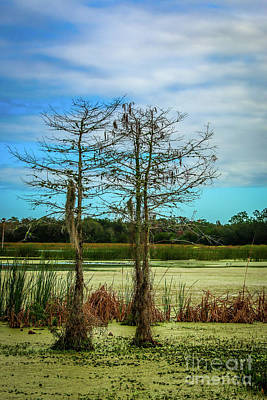 Photograph - Blue Sky Cypress by Tom Claud