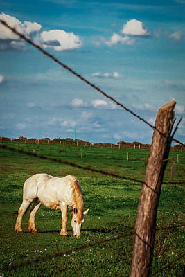Photograph - Blue Sky Grazing by Melinda Ledsome