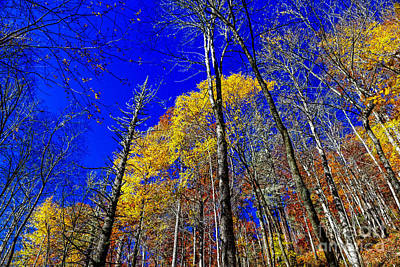 Photograph - Blue Sky In Fall by Paul Mashburn